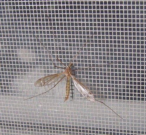 Vliegenramen: hou de beestjes buiten met een vliegenraam